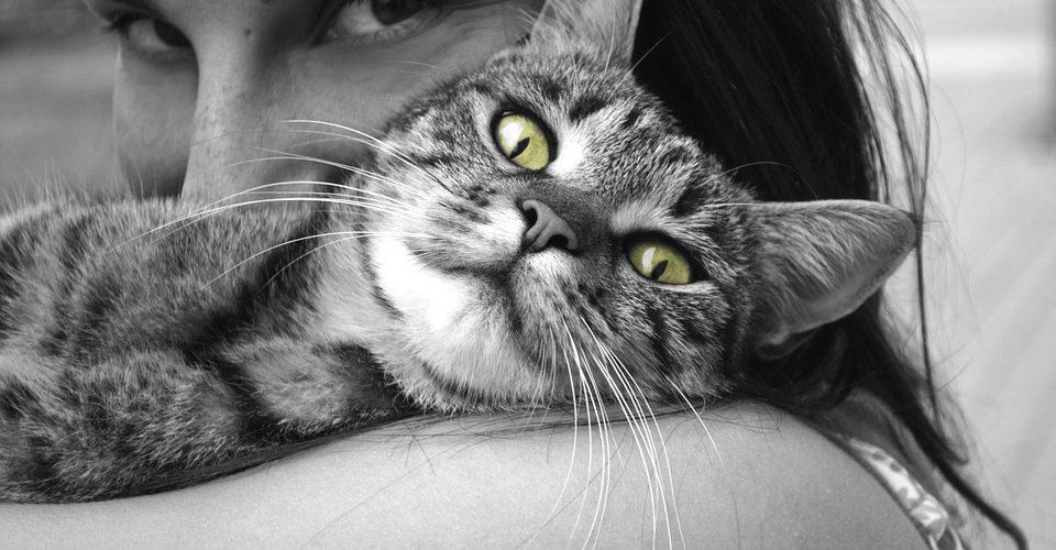 Emotions Pet Girl Animals Hug Cat Happiness